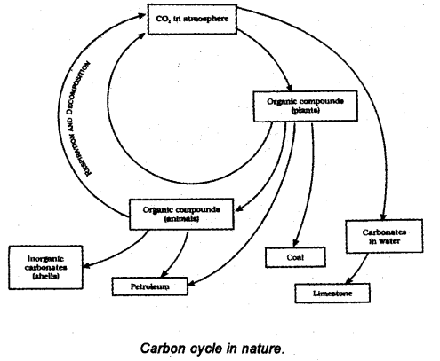 With the help of a labelled diagram show the carbon cycle in nature with the help of a labelled diagram show the carbon cycle in nature describe the two ways in which carbondioxide is fixed in the environment ccuart Gallery