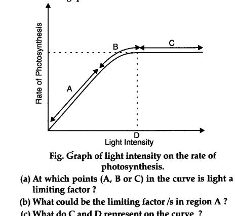 effect light intensity on photsynthesis