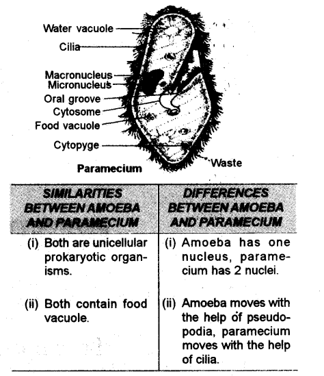 Draw the structure of paramecium and label any six parts on it list draw the structure of paramecium and label any six parts on itg474x549 639 kb ccuart Images