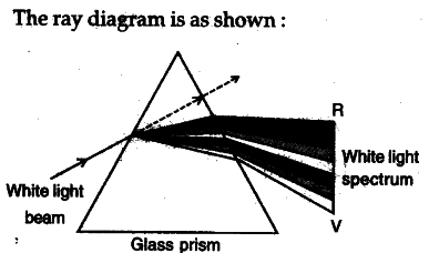 Draw A Ray Diagram Shoeing The Dispersion Through Prism When Narrow Beam Of White Light Is Incident On One Its Refracting Surfaces