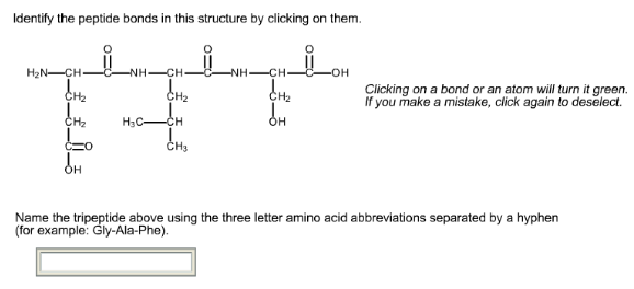 Identify the peptide bonds in this structure by clicking on them image thecheapjerseys Gallery