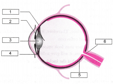 Write down the names of parts of the eye marked in the figure given write down the names of parts of the eye marked in the figure given below ccuart Images