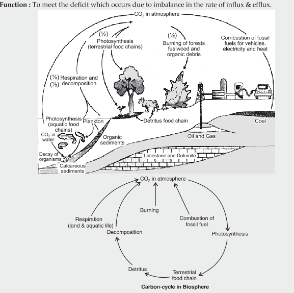 State the function of a reservoir in a nutrient cycle explain the state the function of a reservoir in a nutrient cycle explain the simplified model of carbon cycle in natureg577x574 692 kb ccuart Image collections