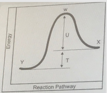 What letter represents the activation energy for the reverse reaction? - Home Work Help